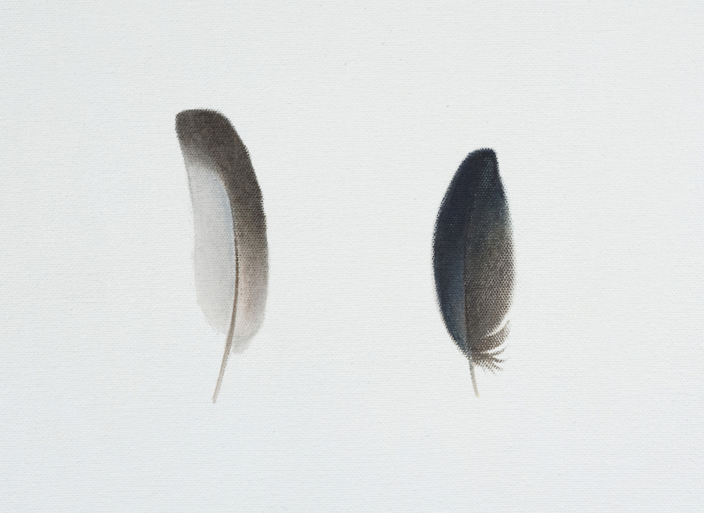 Two feathers