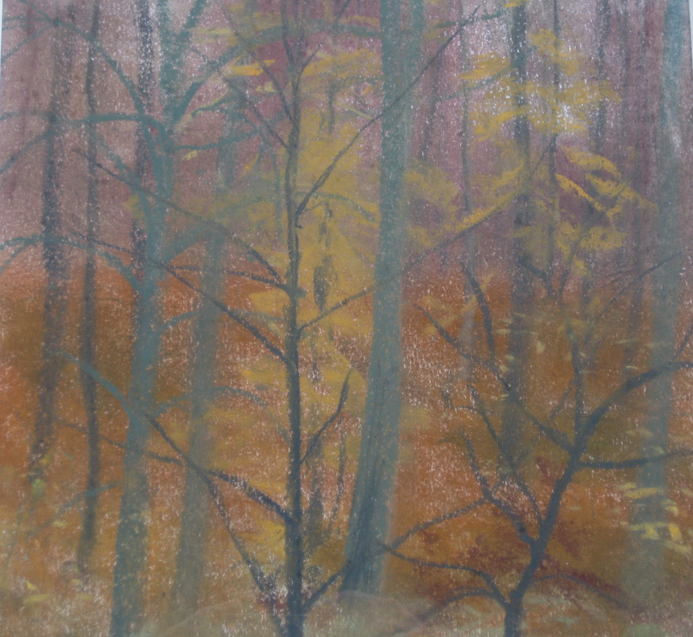 BEECH WOOD, AUTUMN, NORMANDY