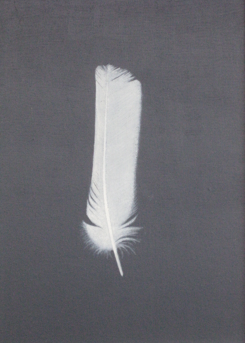 "WHITE FEATHER  10X12"" (25X30cm)   Oil on canvas    Sold  Shortlisted for 2016 Royal Academy Summer Exhibition"