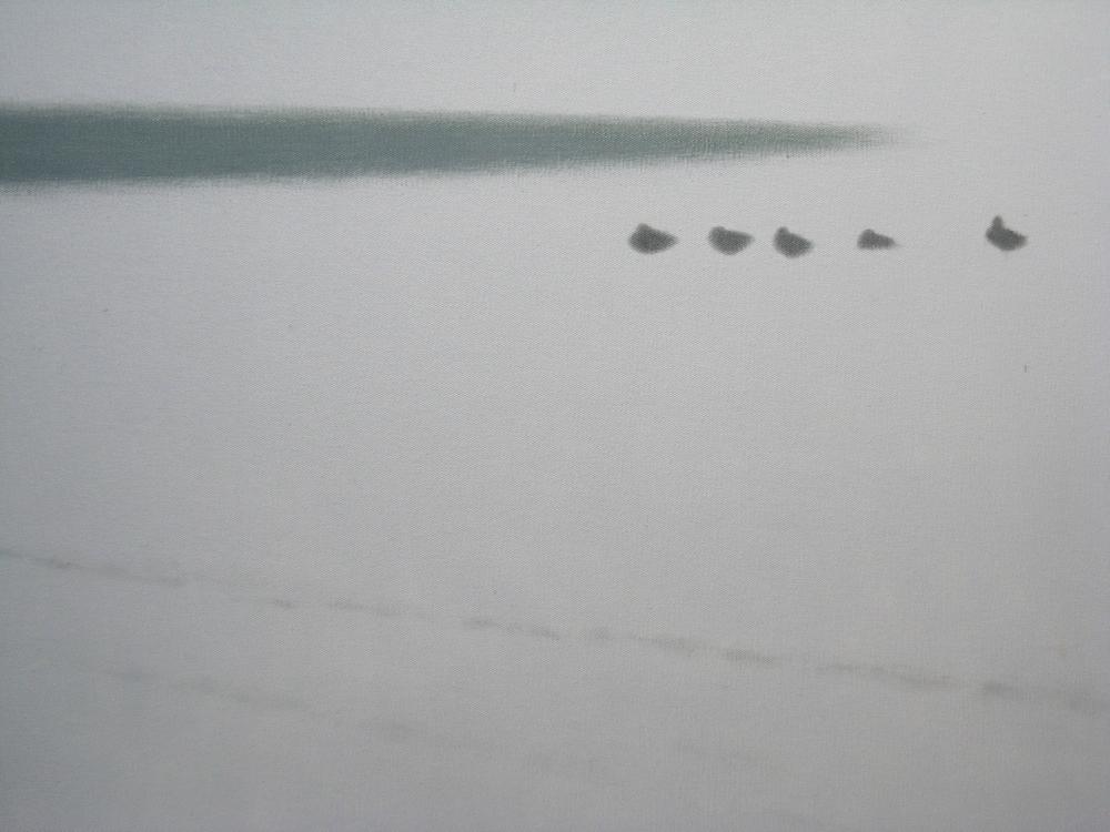 Birds, midwinter, Normandy