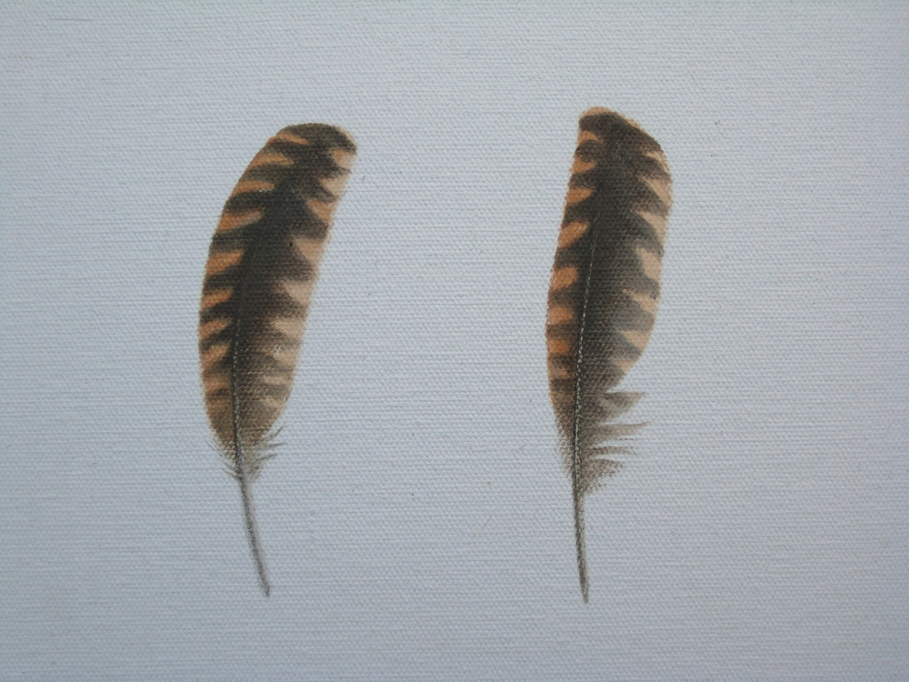 Woodcock feathers