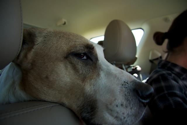 A bored dog