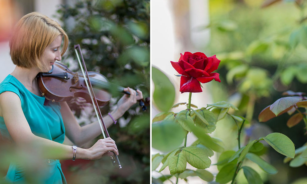 rose and violin.jpg