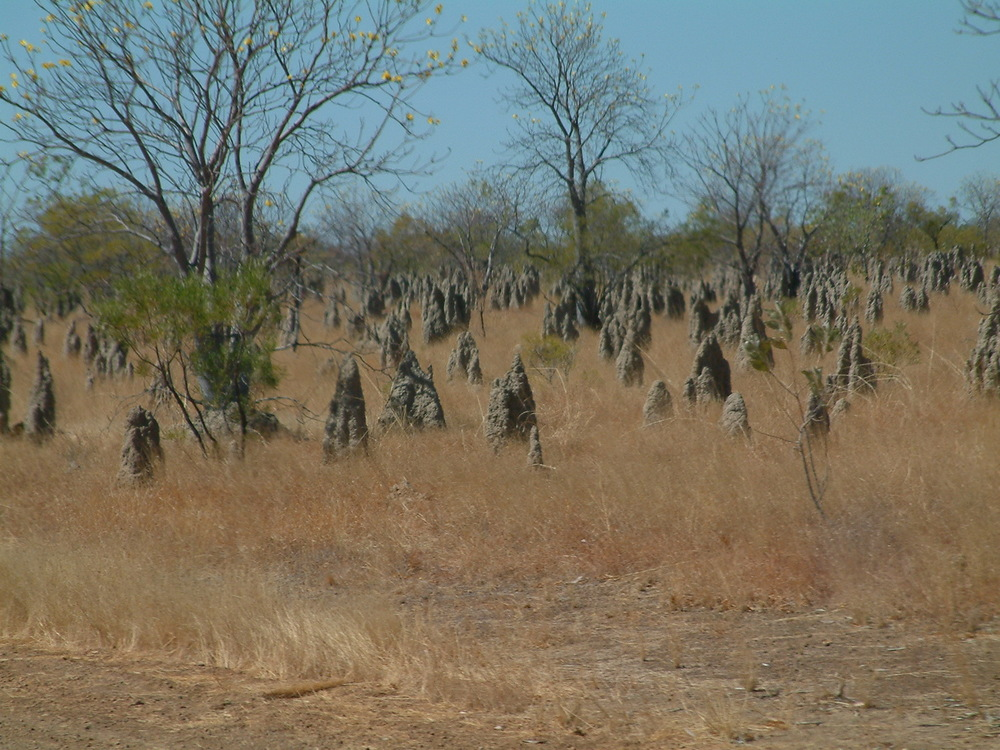 Termite mounds in the Northern Territory.