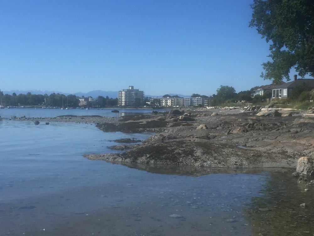 Oak Bay beach Victoria BC (a short walk from my home)