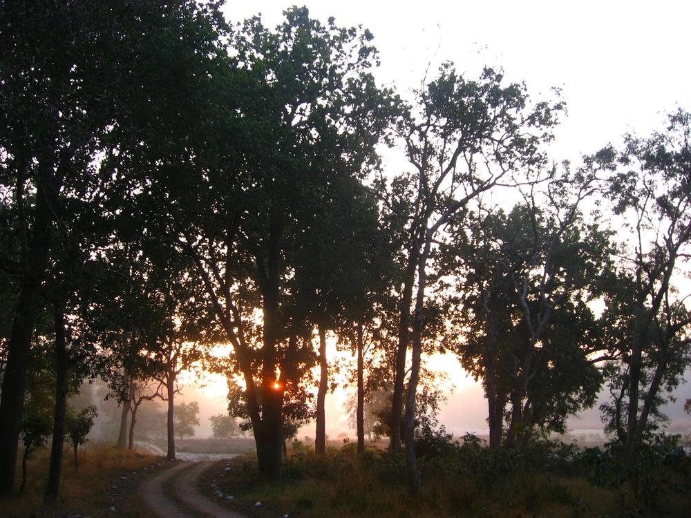 On safari in Haridwar, India