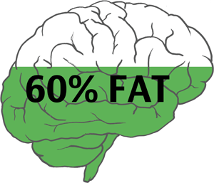 Our brain consists of 60% fat - why eating the right fats is essential for proper mental health.