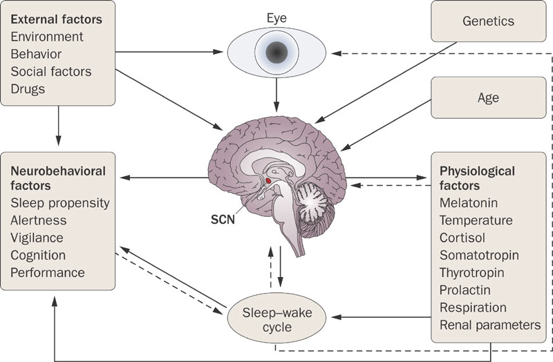 An overview of factors that influence our sleep.