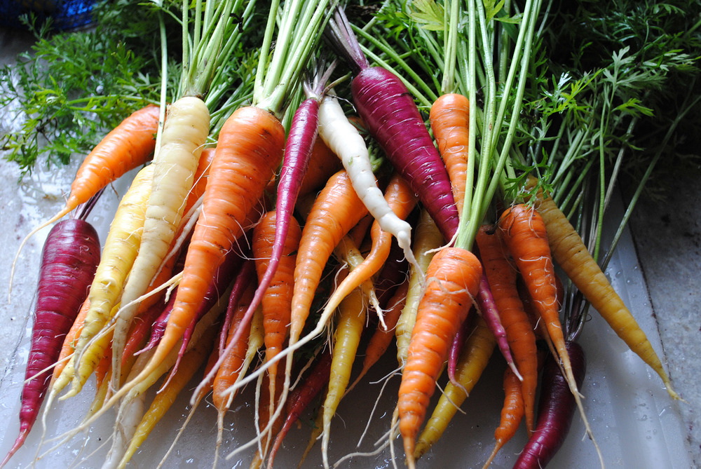 Did you know that even though we tend to think of cooking foods as ridding it of nutrients, many foods actually become more nourishing after being cooked? Cooking actually increases betacarotene bioavailability of carrots!
