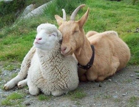 You're so 'needy', said no animal ever. - ElementsOfRecovery.com