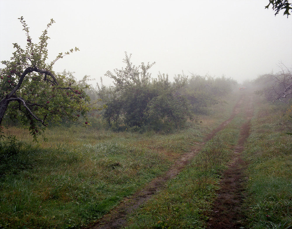 AppleOrchard.jpg