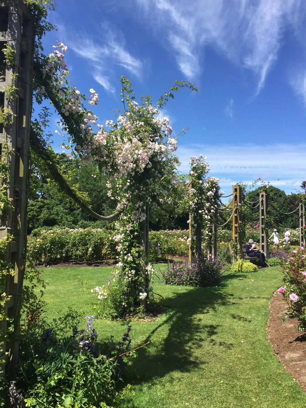 Elizabeth's Rose Garden
