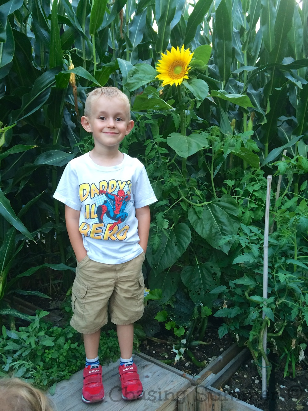 Kian and the Sunflower