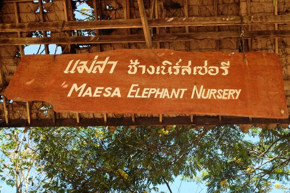 Maesa Elephant Nursery