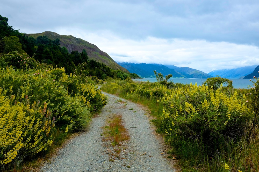The road to Haast