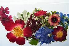 flower case 4.jpg