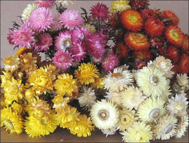 flower case 5.jpg