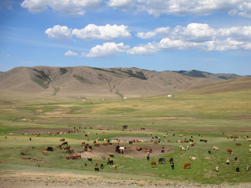 The Mongolian steppe (gers in the distance)