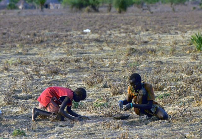 Ravaged by war and famine, South Sudanese hide in swampland and eat weeds to survive – at the same time hiding     from marauding gunmen in the swamps and islands of the river Nile.