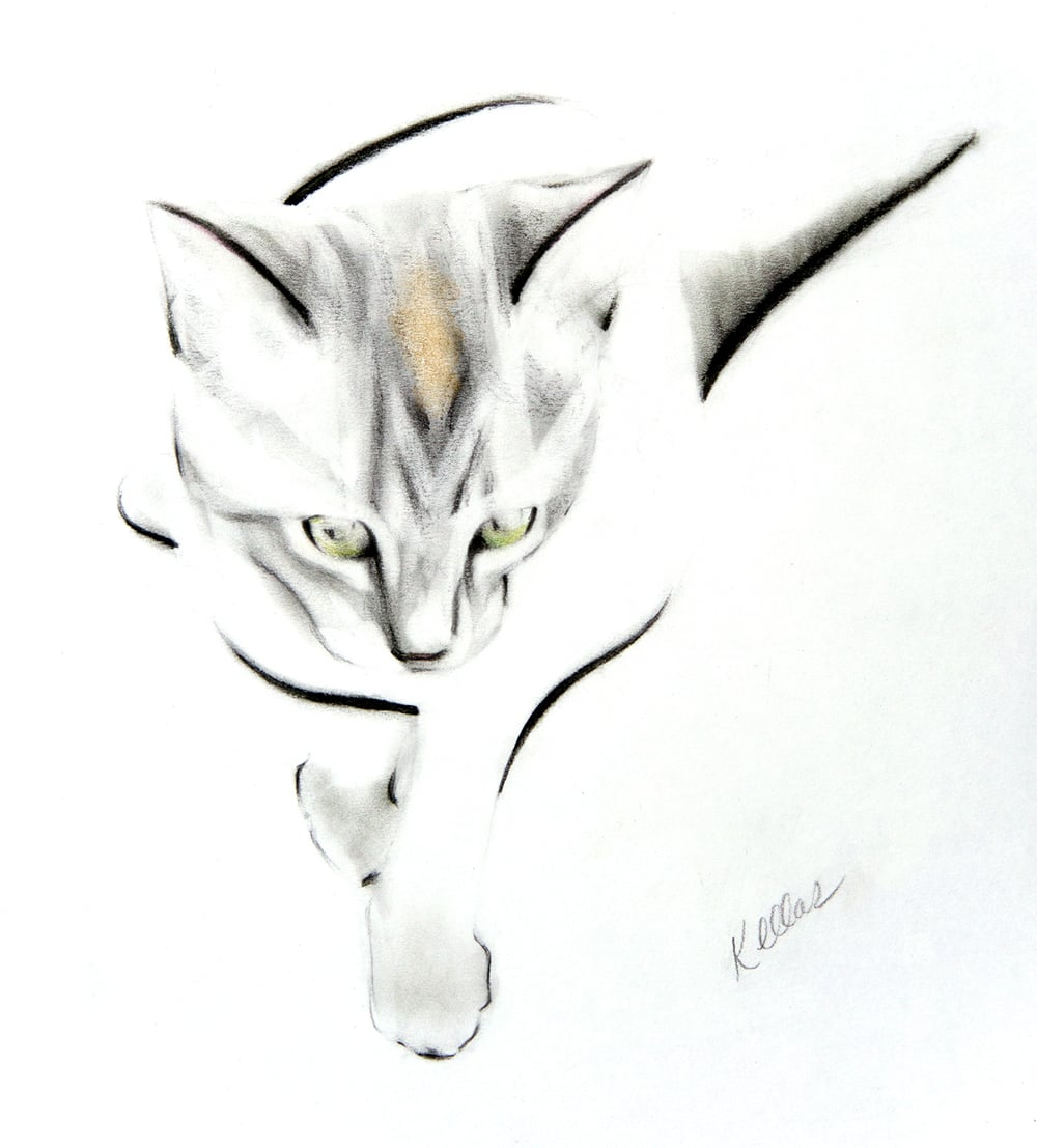 This was a commissioned portrait of Mimi, a grey and white kitten with a golden patch on her head.   She lives in Chile.
