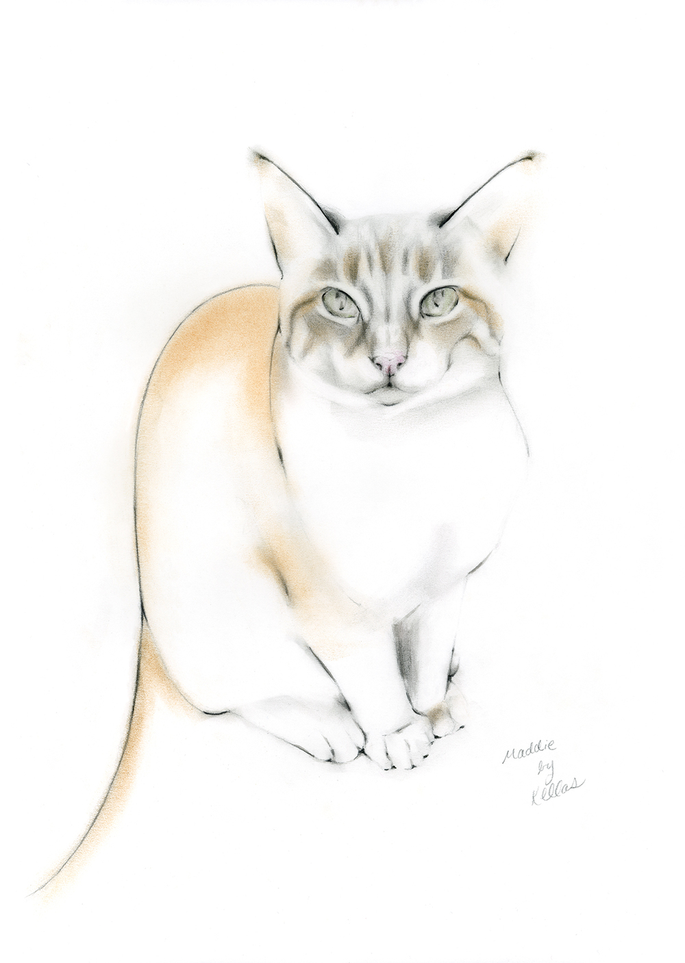 Maddie, a commissioned cat portrait.