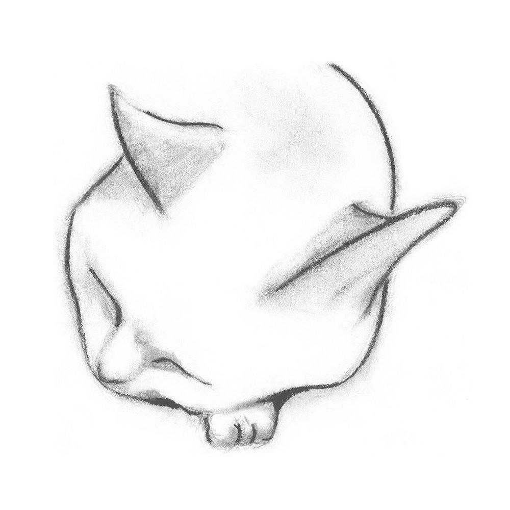 firstcat_image_square_w.jpg