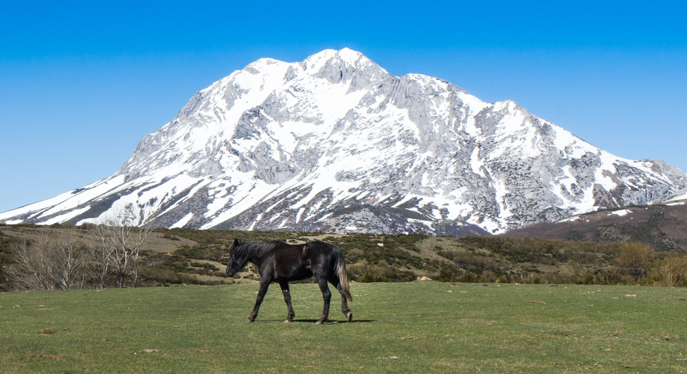 A horse grazes under the gaze of a snow capped mountain.