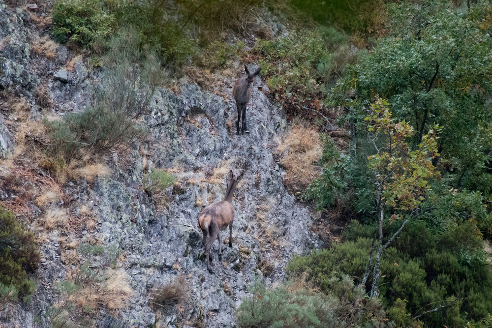 Deer making their way along the steep slopes.