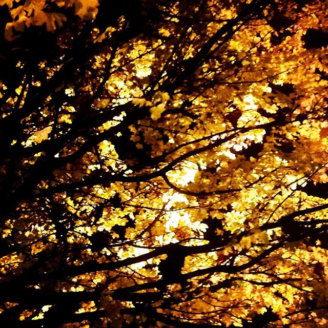 Lit #night #leaves #golden #london #black #branches #yellow #light #dark #contrast #autumn #fall #november
