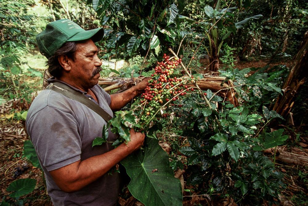 Coffee plantation PR