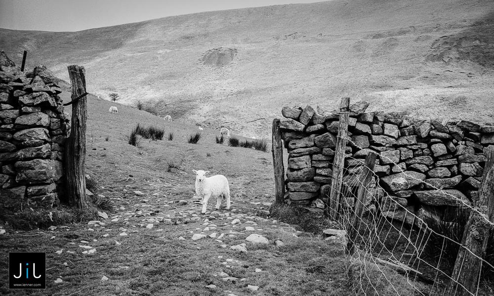 Photojournalism - Wales