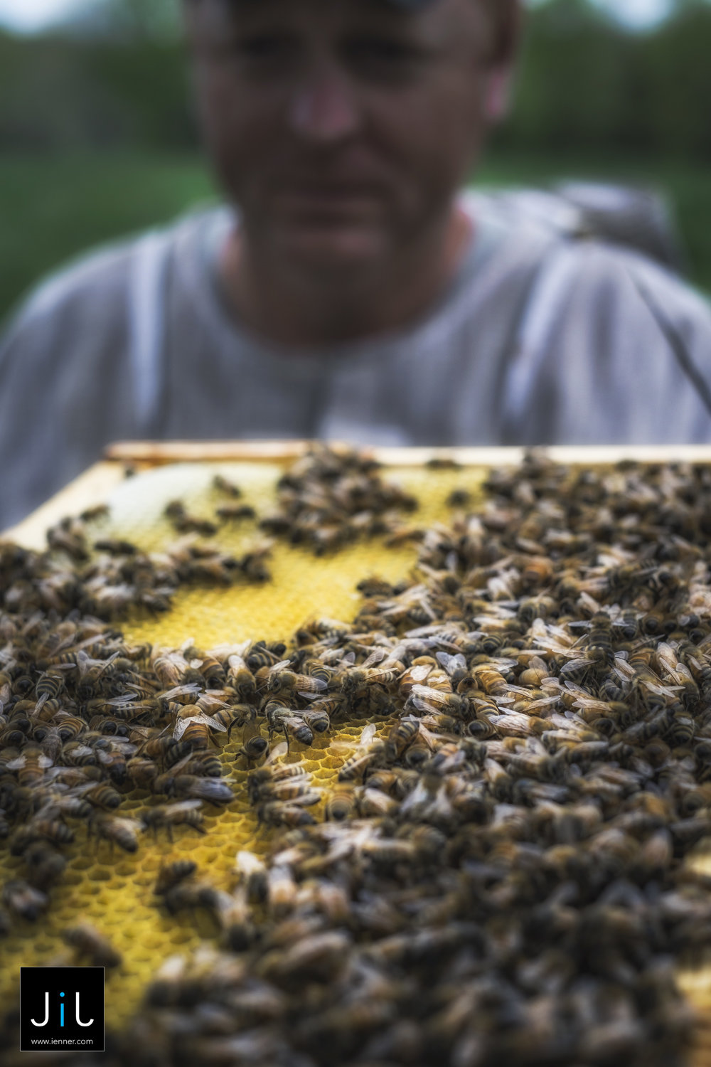 X-T1_Bees_CT_05-2016-355-Edit.jpg