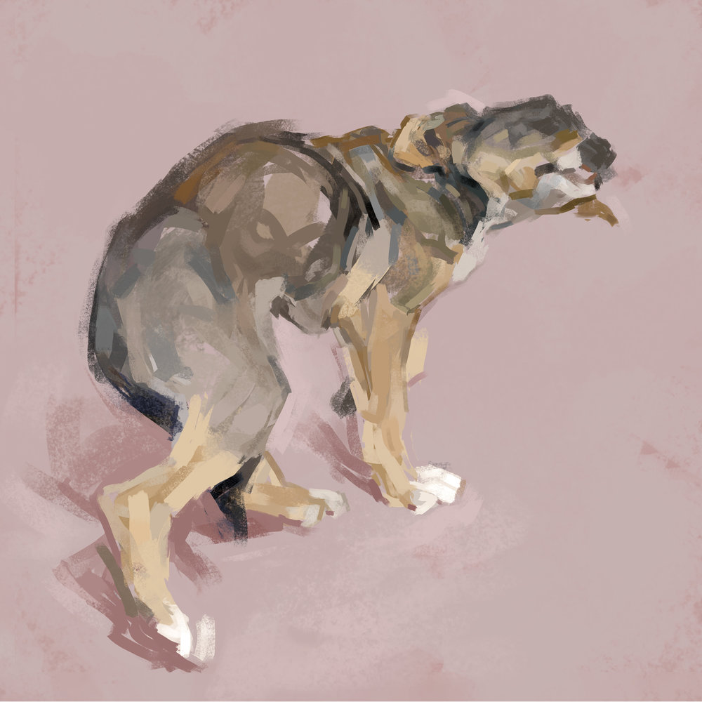 dog3.1.2.3.4.5.6Bfinal3square.jpg