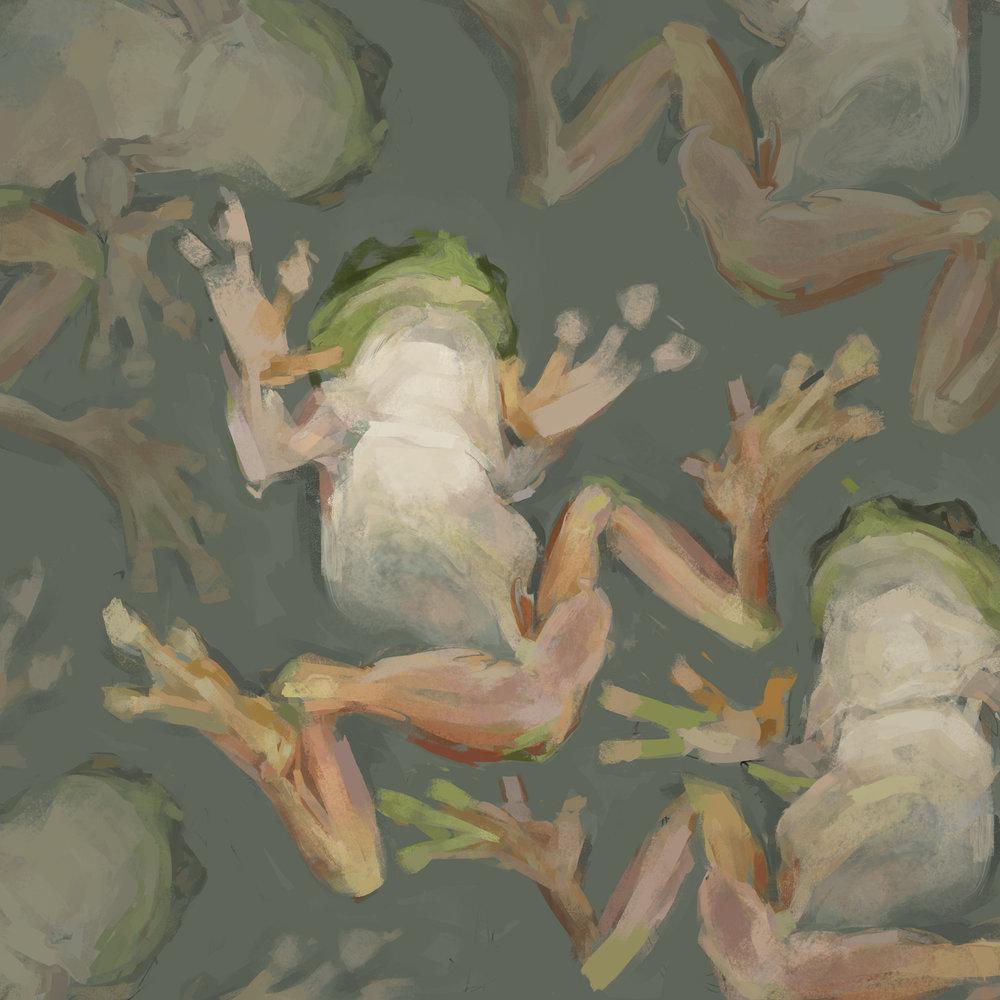 frogs2-3.jpg