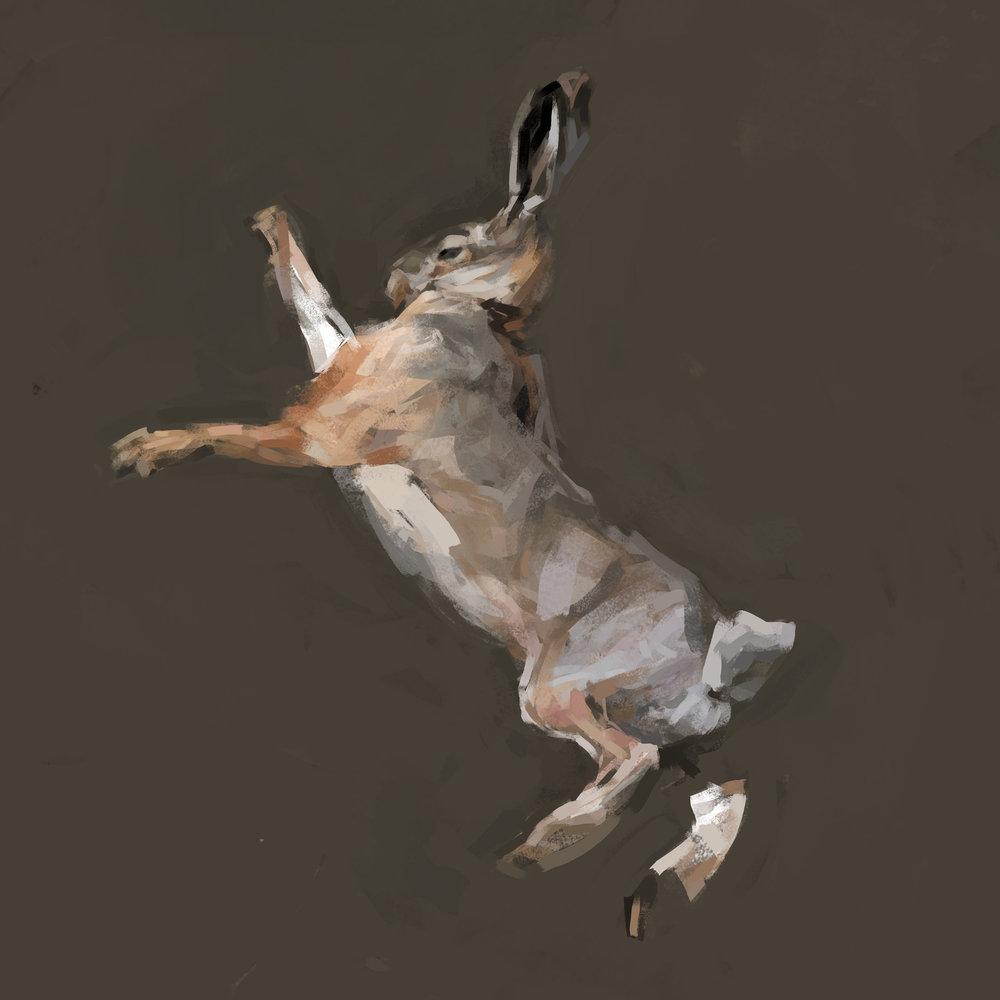 rabbit1flatsquare2.jpg