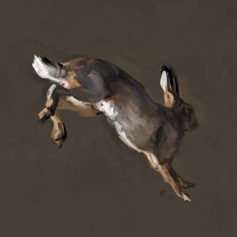 rabbit2.2flat2.jpg