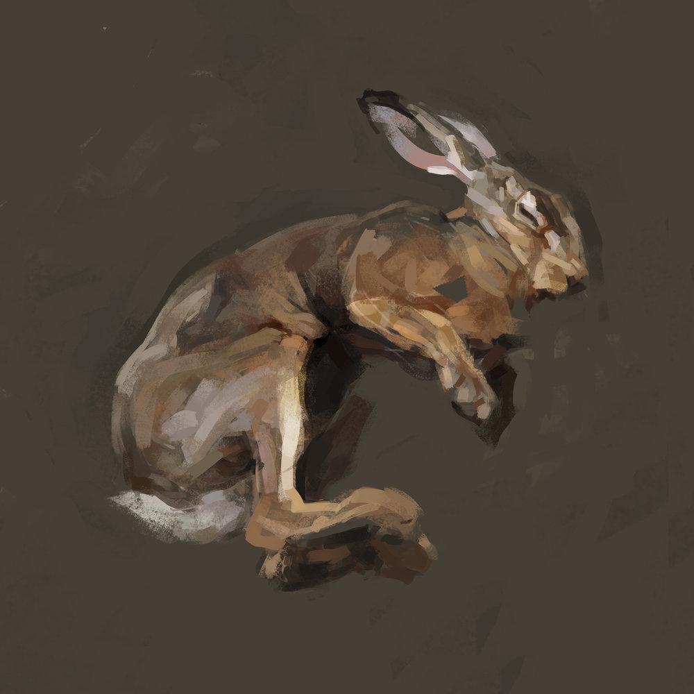 rabbit4flat.jpg