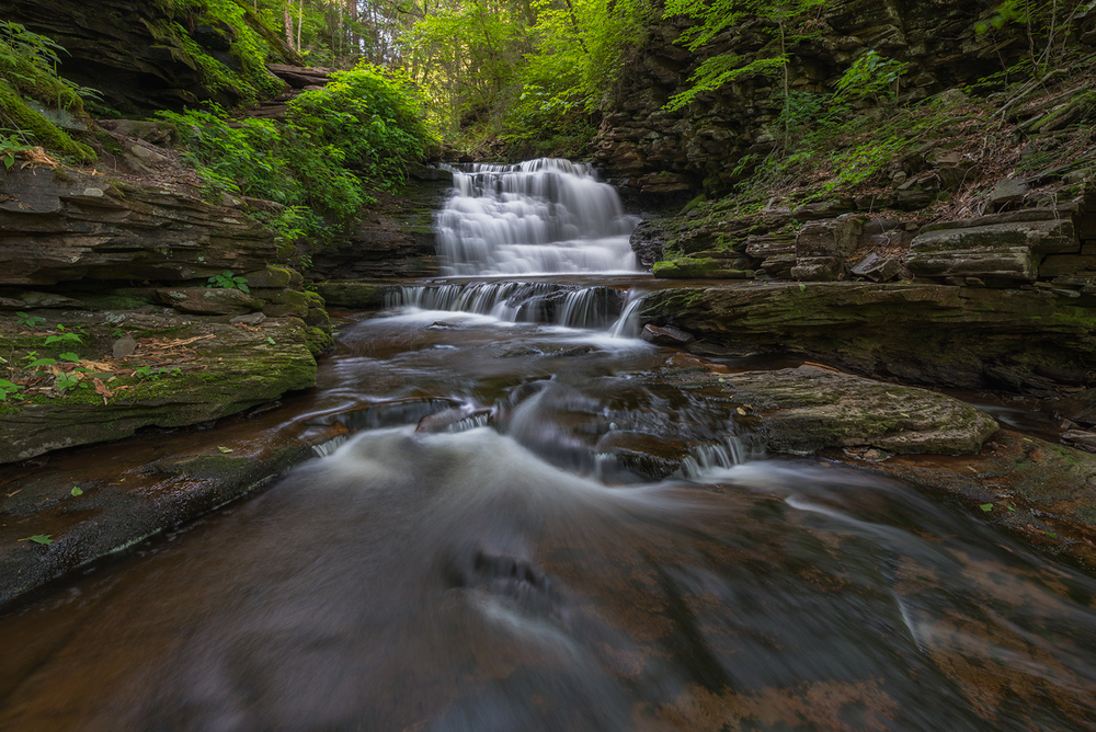 Early morning light filters through new spring growth above Delaware Falls in Rickett's Glen State Park, Pennsylvania.