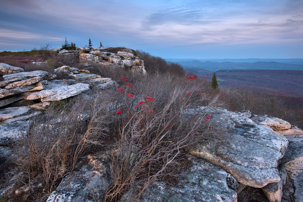 Bear Rocks Vista, Dolly Sods Wilderness, West Virginia