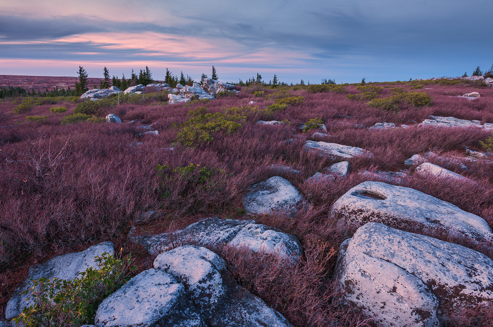 Twilight at Bear Rocks • Dolly Sods Wilderness, West Virginia