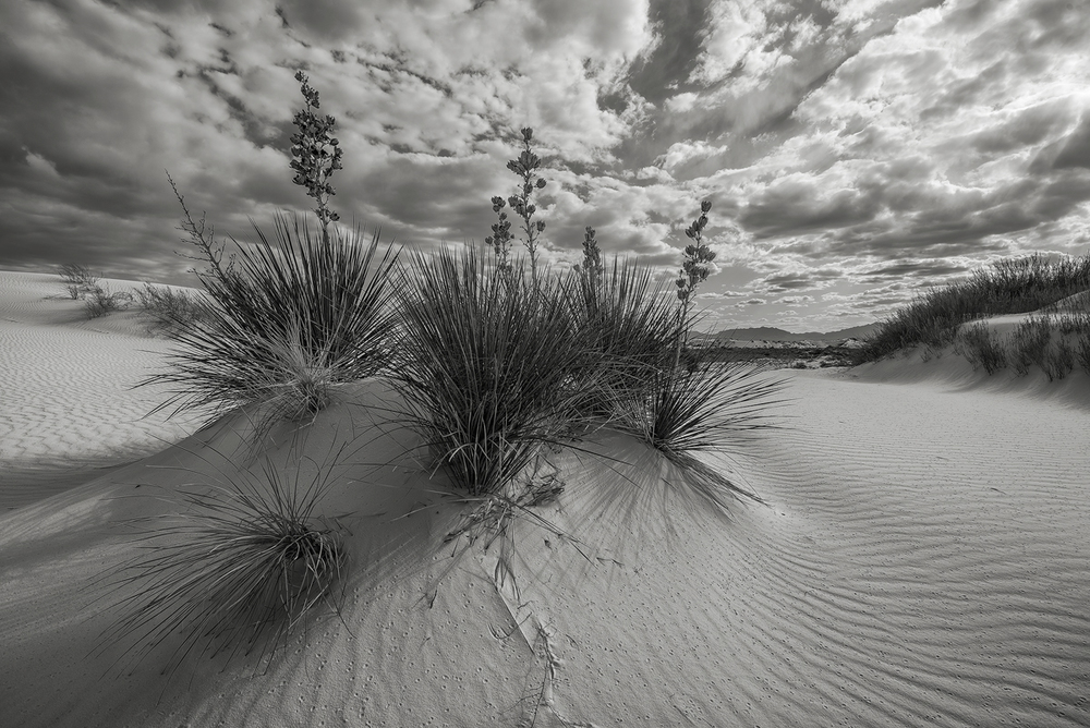 The characteristic yuccas, so prevalent in White Sands, help frame a landscape of sand and clouds.