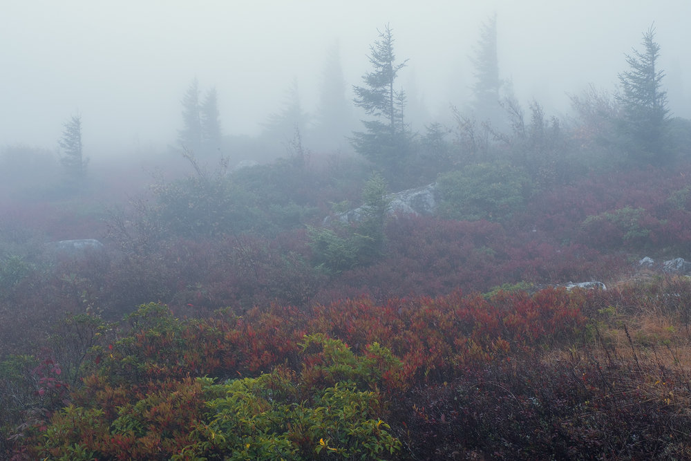 Foggy morning at Dolly Sods • Dolly Sods Wilderness, WV