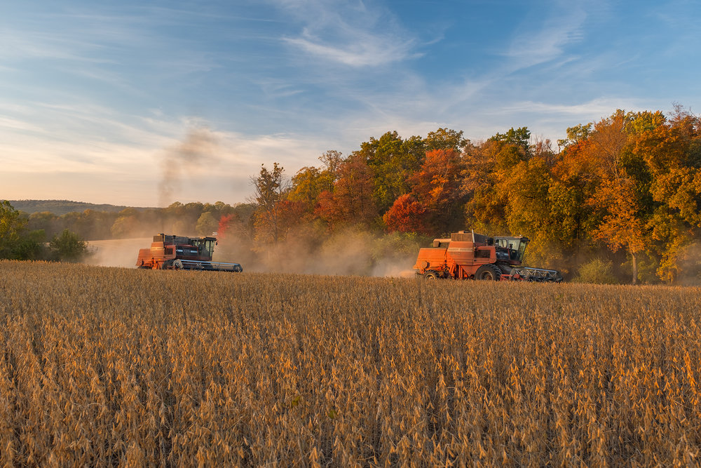 Two combines harvest against a tree line full of fall color. Fuji X-T2 and a Fujinon XF55-200mm at 70mm. Image exposed at ISO 200 at f5.6 for 1/60 of a second.