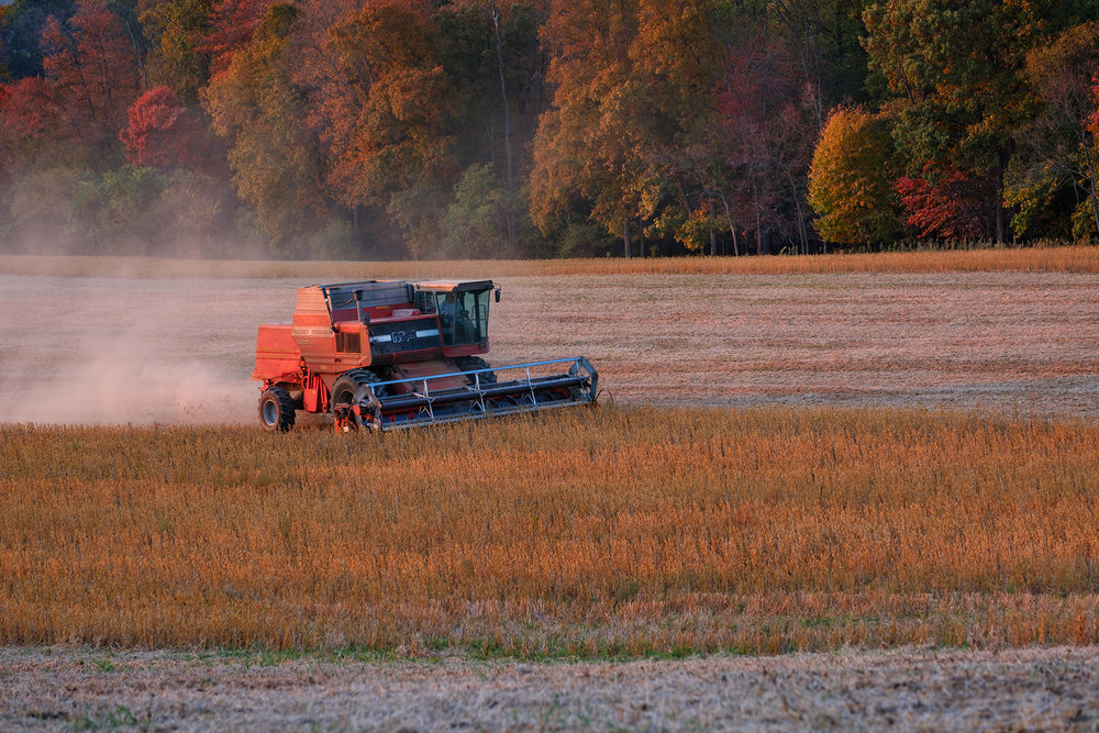Beautiful late evening light illuminates a combine working a field of soybeans. Fuji X-T2 and a Fujinon XF55-200mm at 70mm. Image exposed at ISO 200 at f5.6 for 1/40 of a second.