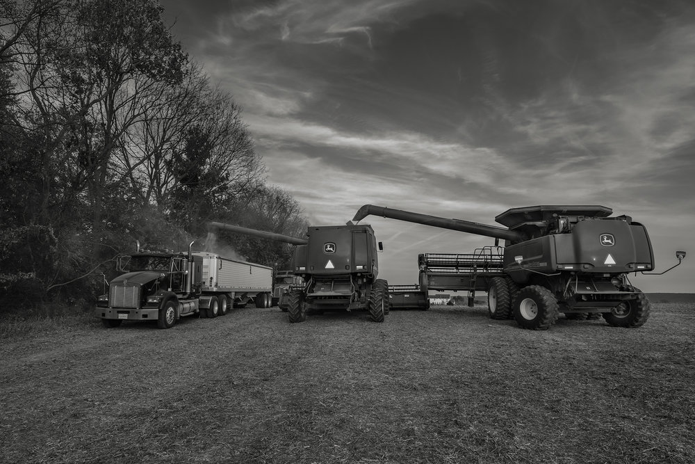 Unloading the harvest. Fuji X-T2 and a Fujinon XF16-55mm f2.8 WR at 23mm. Image exposed at ISO 800 at f5.6 for 1/125 of a second.