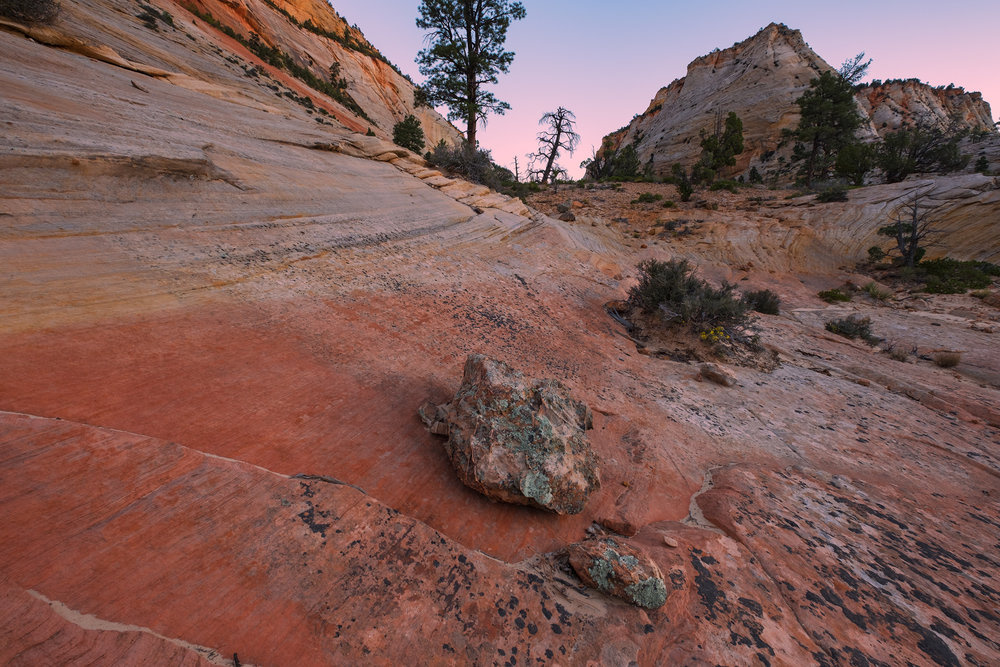 The Colors of Slickrock, Zion National Park, UT.