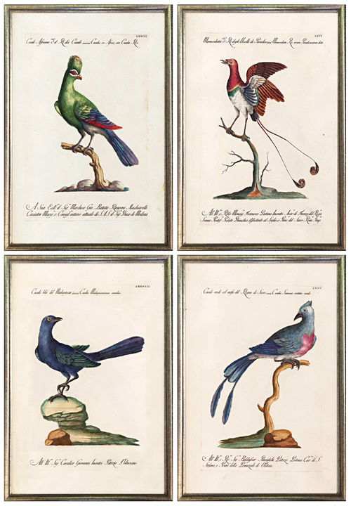 Antique Bird Prints Gallery Wall Frames — MUSEUM OUTLETS