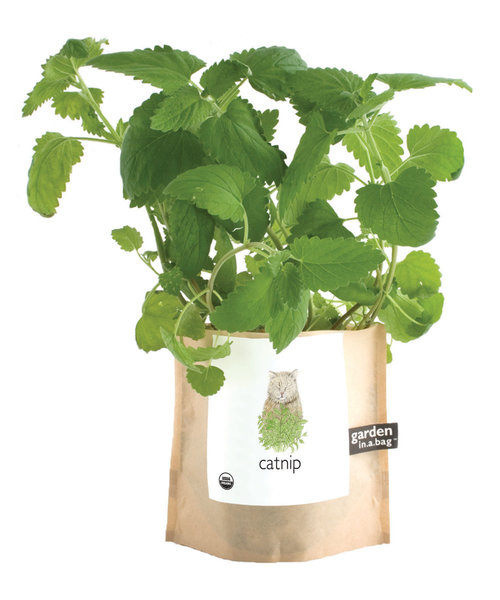 catnip garden in a bag cat gift — MUSEUM OUTLETS