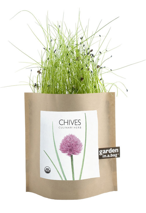 organic chives garden in a bag — MUSEUM OUTLETS