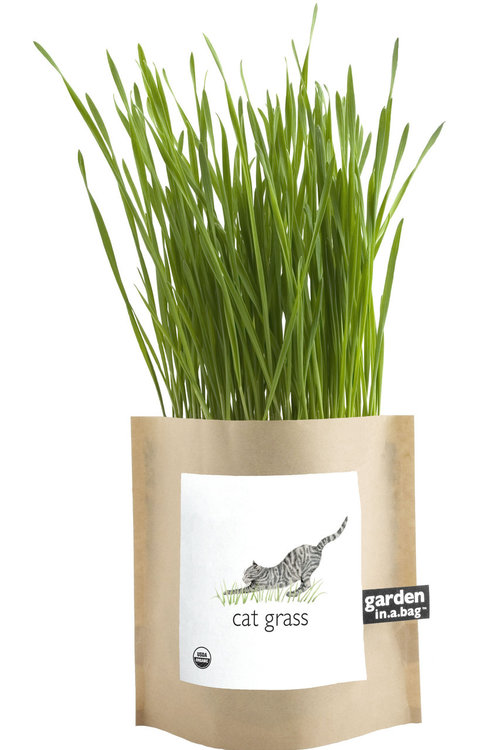 organic cat grass garden in a bag gift — MUSEUM OUTLETS